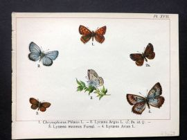 Joanny Martin 1902 Antique Butterfly Print 17